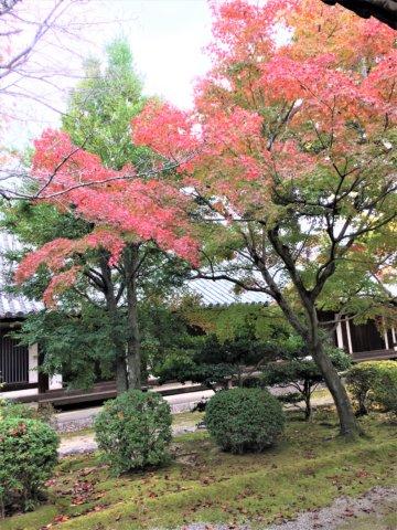 Horyuji in autumn red leaf