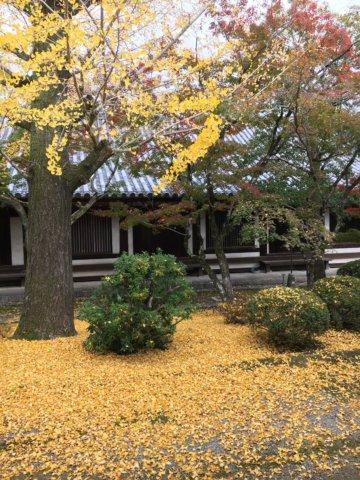 Horyuji in autumn yellow leaf