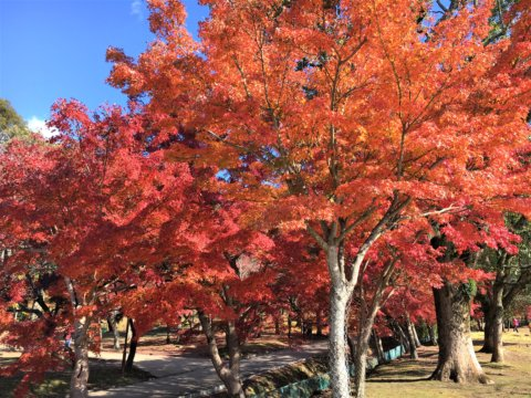 Yoshiki River in Ukigumo Enchi in Autumn