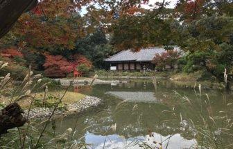 Joruri-ji main hall